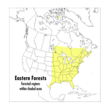 ISBN: 9780395928950, Title: A Field Guide to Eastern Forests: North America