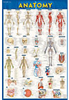 ANATOMY POSTER PAPER UPDATED